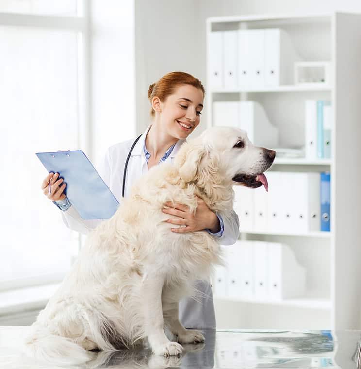 matériel vétérinaire